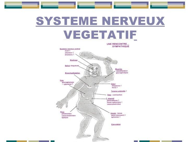 SYSTEME NERVEUX VEGETATIF