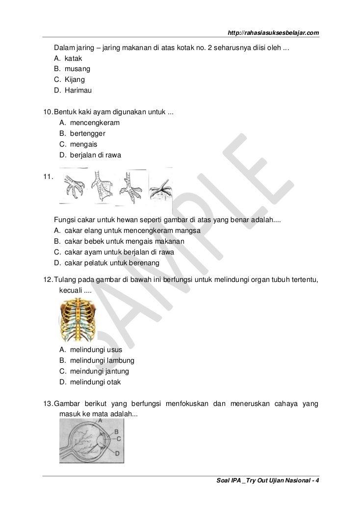 Soal Ekosistem Sd Soal Fisika Sd Kelas 5 Kumpulan Latihan Soal Ipa Smp Kelas Vii Lengkap 1 Tahun