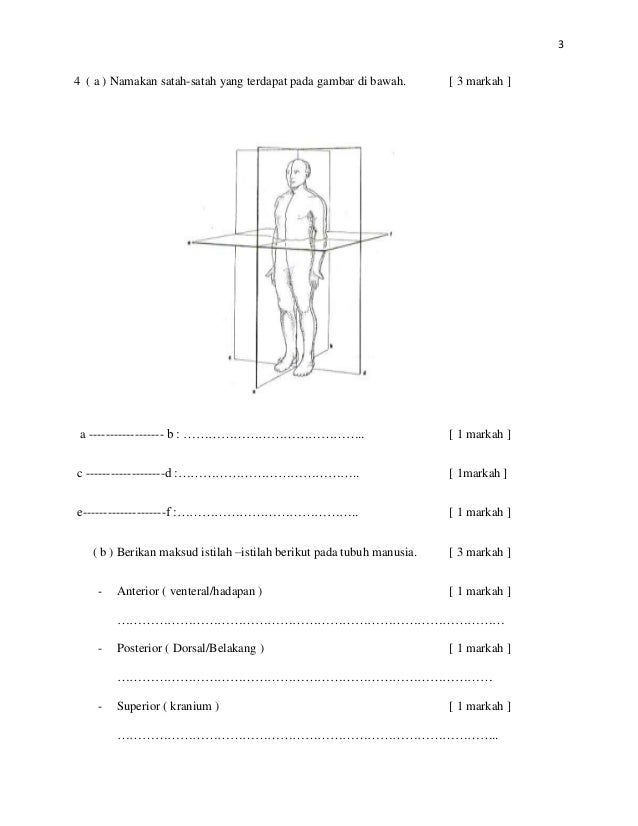 Soalan dan skema anatomi stpm modular Slide 3