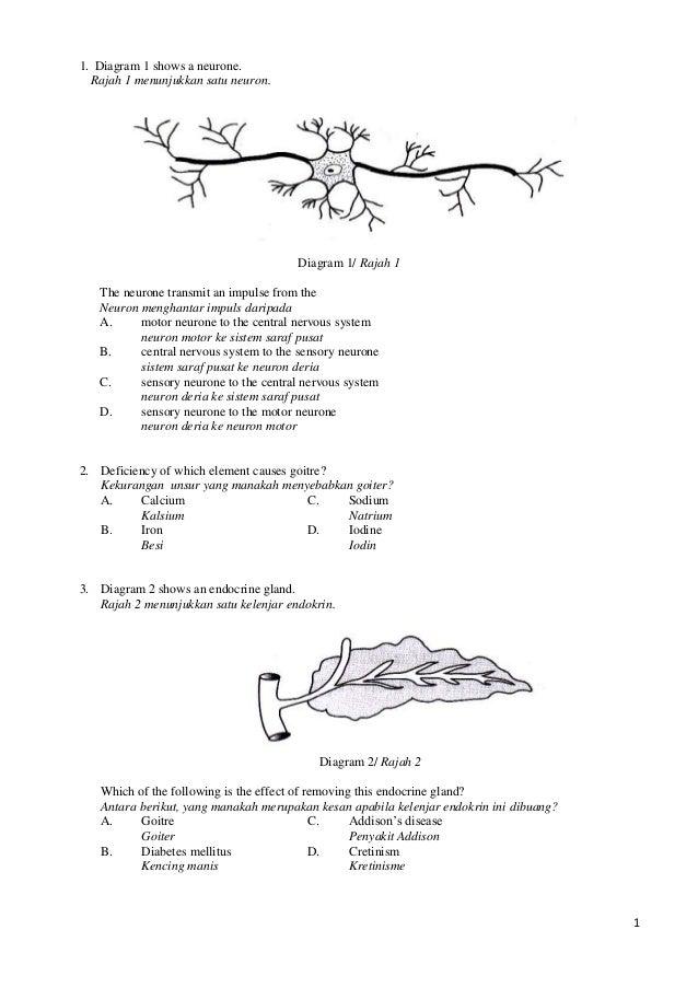 1 1. Diagram 1 shows a neurone. Rajah 1 menunjukkan satu neuron. Diagram 1/ Rajah 1 The neurone transmit an impulse from t...