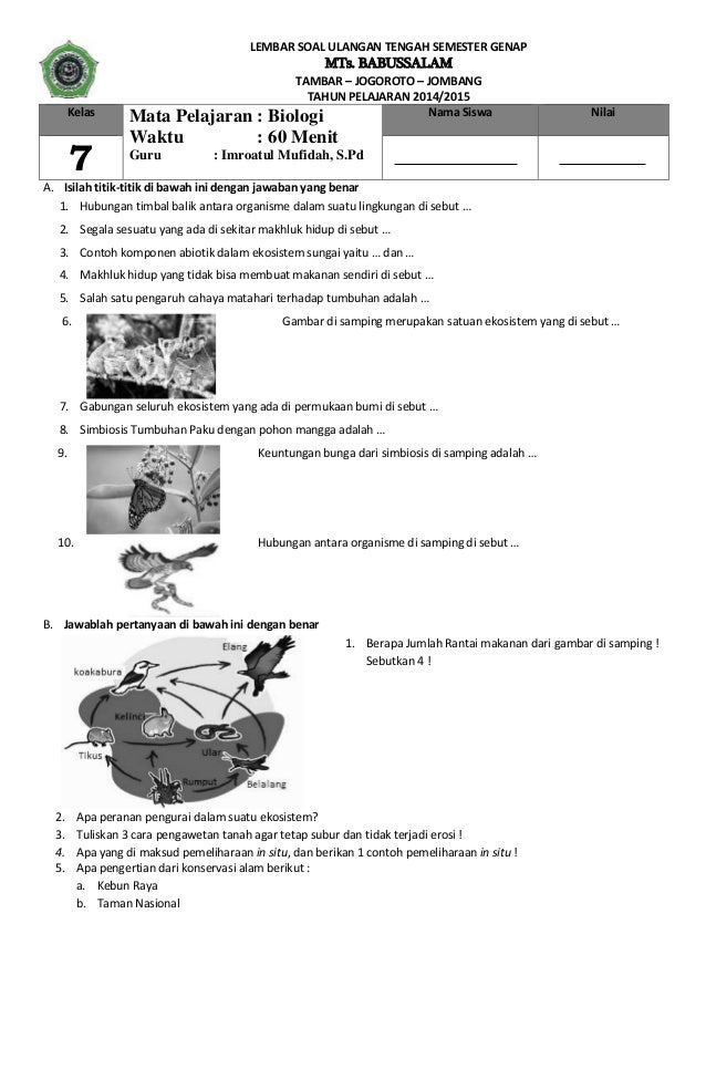 pertanyaan essay tentang fotosintesis
