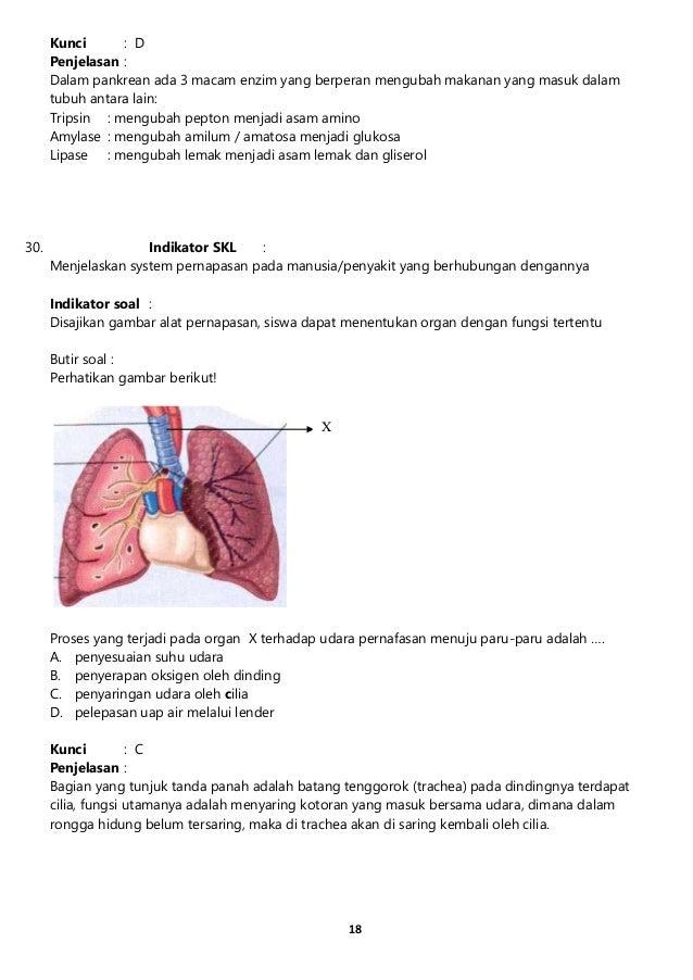 12 Sistem dan Anatomi Tubuh Manusia Lengkap dengan Penjelasannya