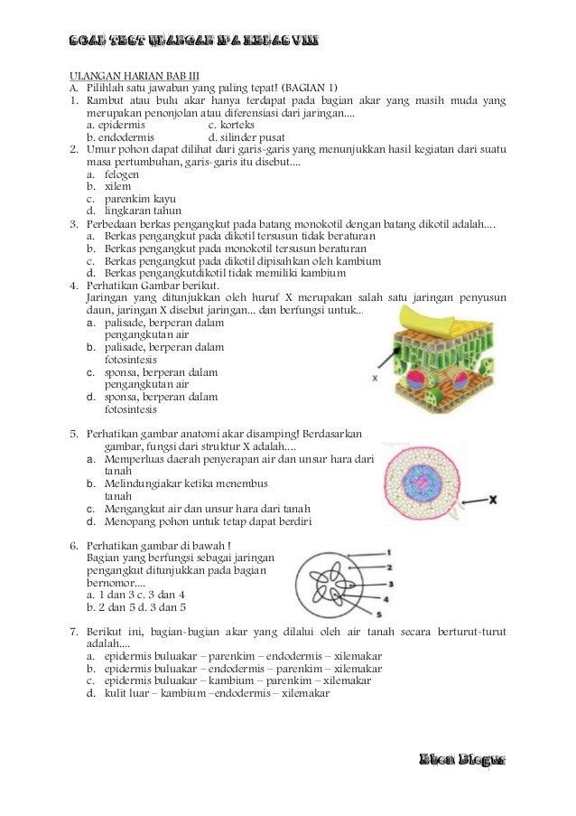 soal essay fotosintesis kelas 8