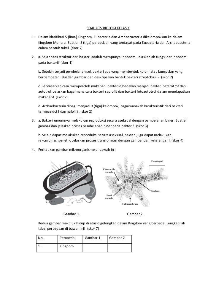 contoh soal essay biologi tentang monera