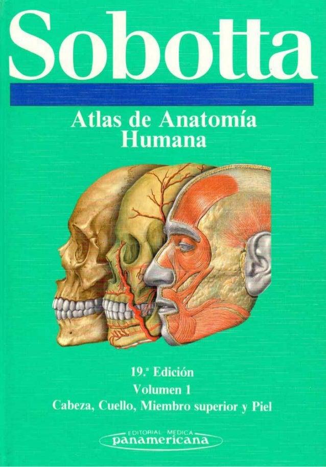 anatomia sobotta