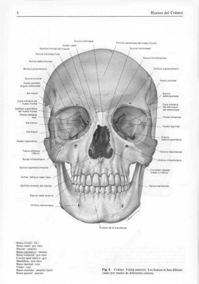 Sobotta atlas de anatomia humana volumen 1