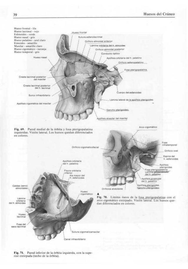 Lujoso Lo Que Es Una Unidad De Motor En La Anatomía Ilustración ...