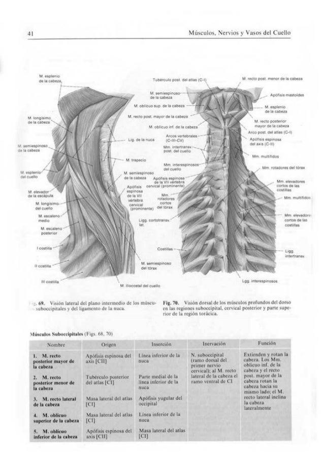 Famoso Macho Inferior Anatomía Abdominal Foto - Imágenes de Anatomía ...