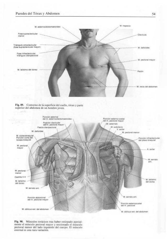 Atractivo Abdomen Anatomía Masculina Friso - Anatomía de Las ...