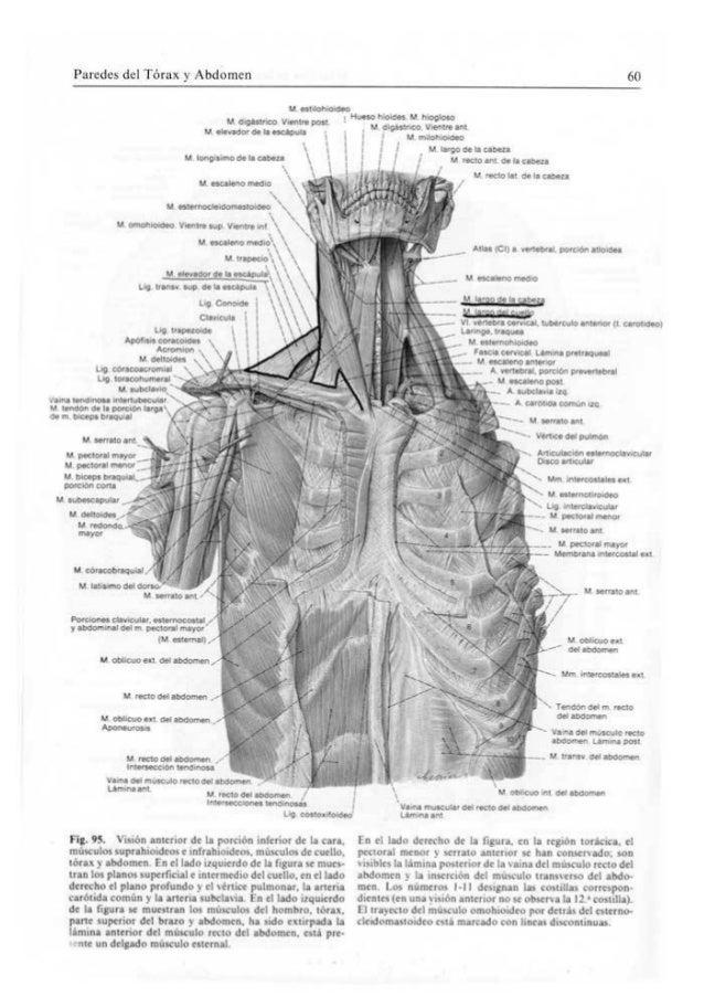 Sobotta atlas de anatomia humana volumen 2