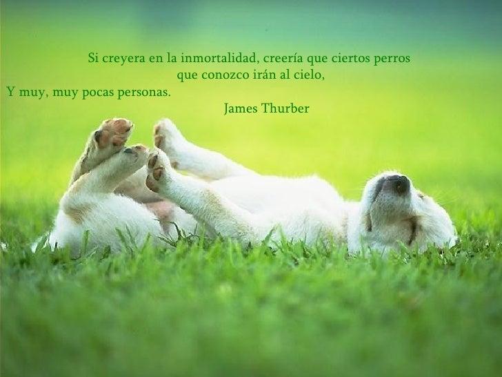 Si creyera en la inmortalidad, creería que ciertos perros  que conozco irán al cielo, Y muy, muy pocas personas.   James T...