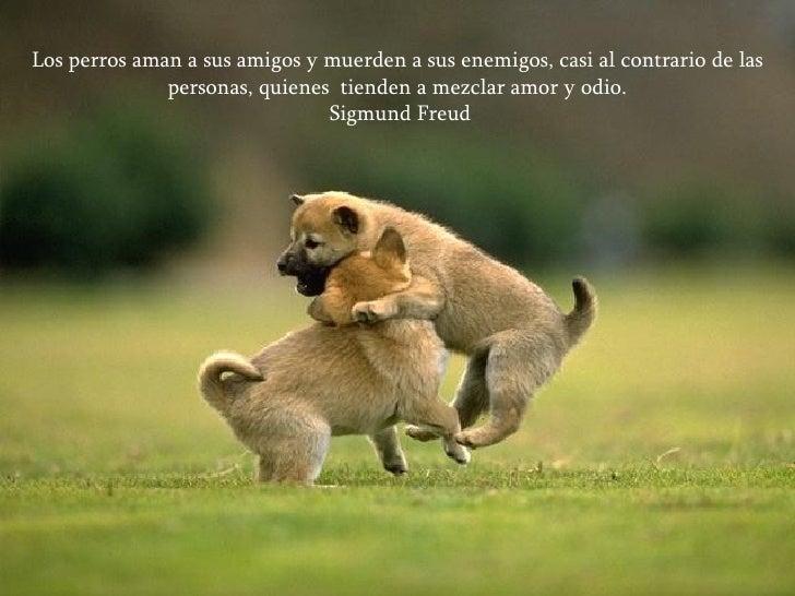 Los perros aman a sus amigos y muerden a sus enemigos, casi al contrario de las personas, quienes  tienden a mezclar amor ...
