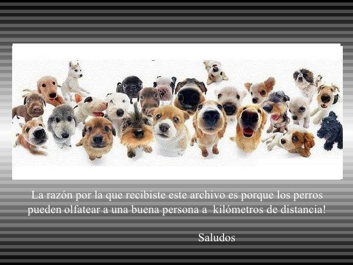 La razón por la que recibiste este archivo es porque los perros pueden   olfatear a una buena persona a  kilómetros de dis...
