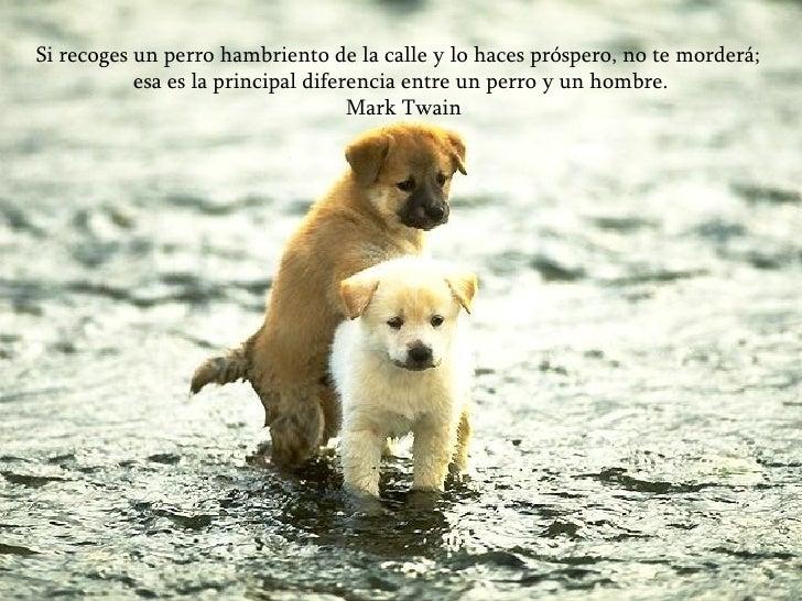 Si recoges un perro hambriento de la calle y lo haces próspero, no te morderá;  esa es la principal diferencia entre un pe...