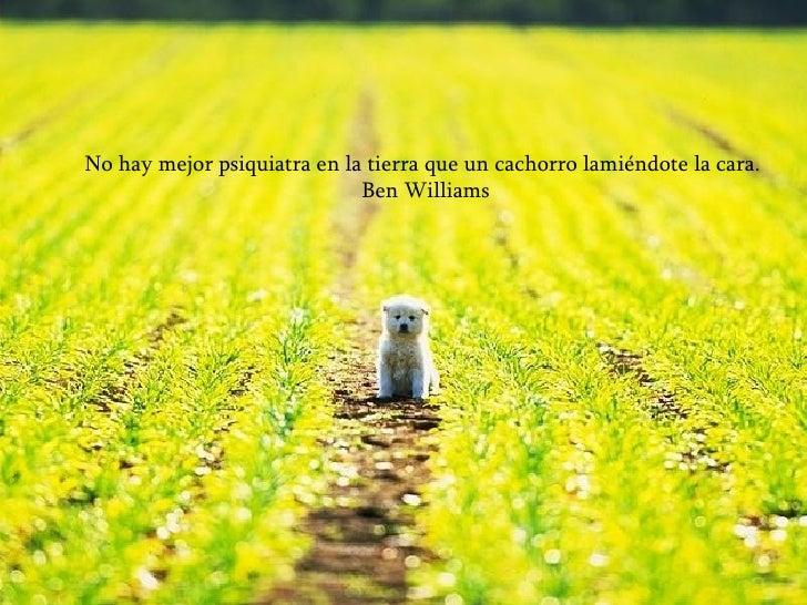 No hay mejor psiquiatra en la tierra que un cachorro lamiéndote la cara. Ben Williams