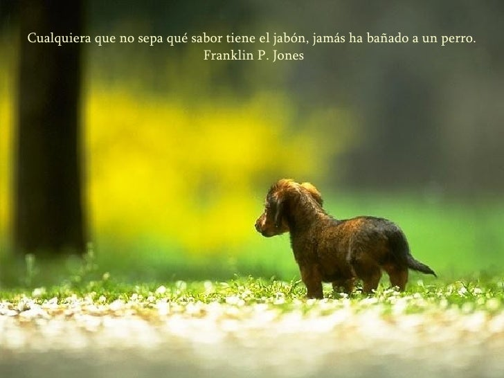 Cualquiera que no sepa qué sabor tiene el jabón, jamás ha bañado a un perro. Franklin P. Jones