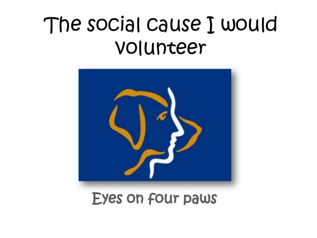 The social cause I would volunteer  Eyes on four paws