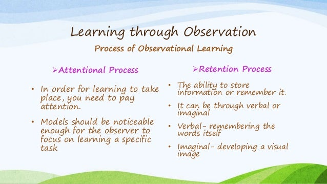 albert bandura observational learning essay Essay on implementing observational learning :: a cursory understanding of observational learning and how it may be learning essay - albert bandura.