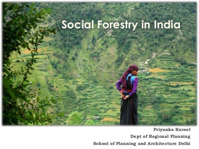 social forestry Forests provide food and sustenance to millions of people in the region and  deforestation spells hunger and a looming food insecurity to an.