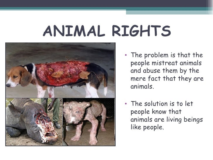 the issue of animal cruelty Animal rights description of beliefs: non-human animals have interests, and those interests ought not to be discriminated against on the basis of species membership.