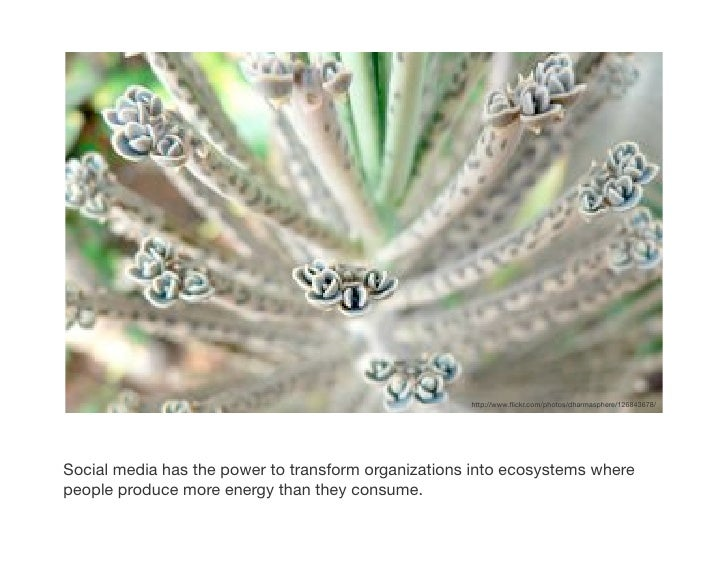 http://www.flickr.com/photos/dharmasphere/126843678/!     Social media has the power to transform organizations into ecosys...
