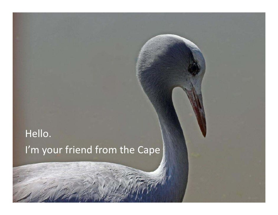 Hello.I'm your friend from the Cape