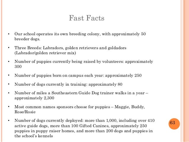 Social media guide dog north america for Interesting facts north america