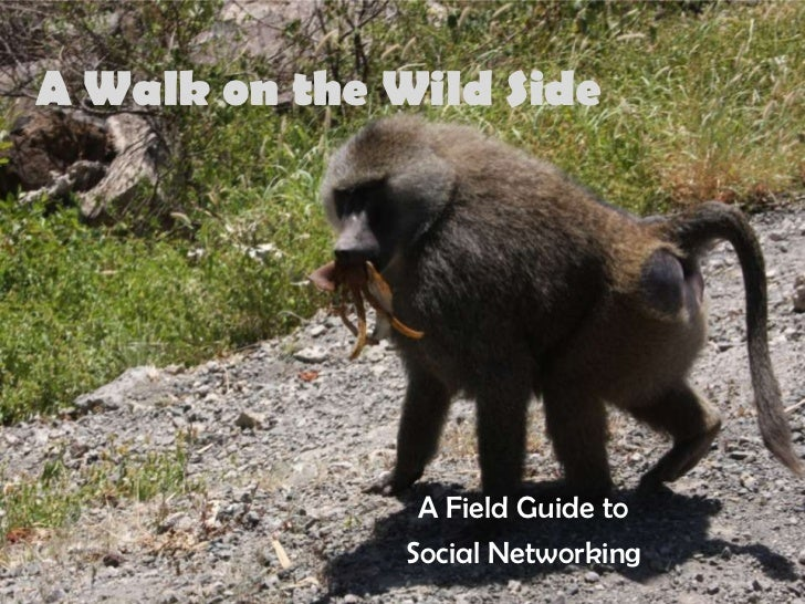 A Walk on the Wild Side                     A Field Guide to                Social Networking