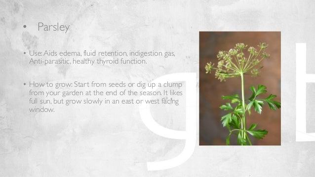 the didyouknow facts on indoor gardening presentation 1
