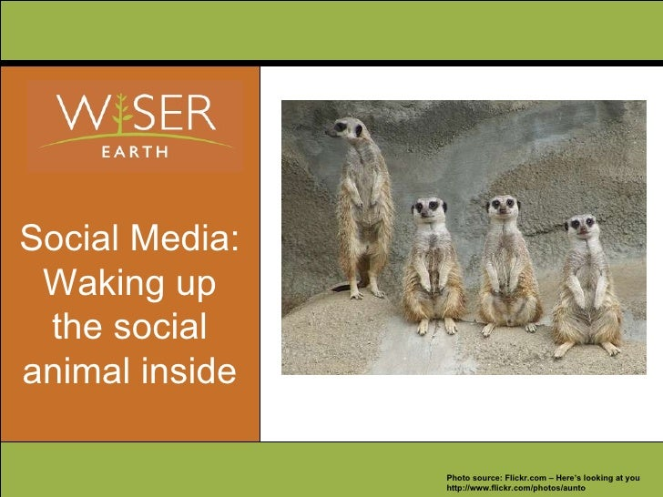 Social Media: Waking up the social animal inside Photo source: Flickr.com – Here's looking at you http://www.flickr.com/ph...