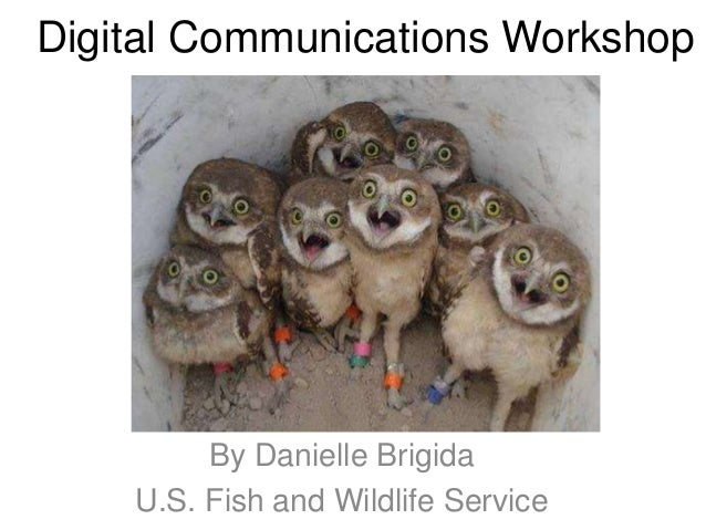 Digital Communications Workshop By Danielle Brigida U.S. Fish and Wildlife Service
