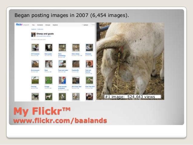 Began posting images in 2007 (6,454 images).                                  #1 image: 524,643 viewsMy Flickr™www.flickr....