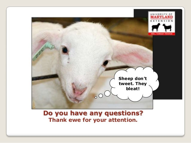 Sheep don't                       tweet. They                         bleat!Do you have any questions? Thank ewe for your ...