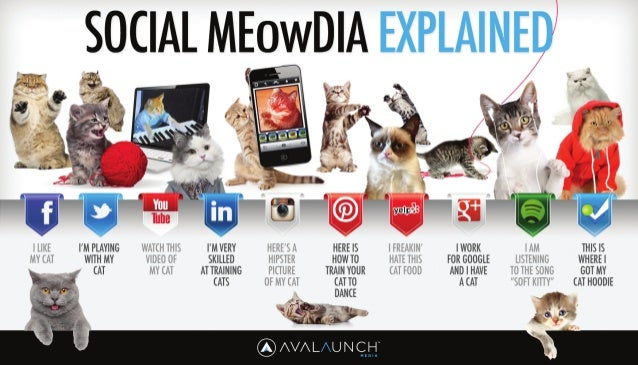 Social Media Explained by Cats
