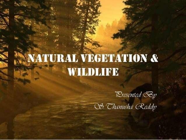 Presented By S.Thanusha Reddy