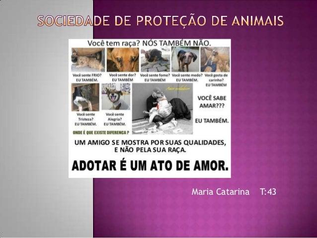 Maria Catarina   T:43