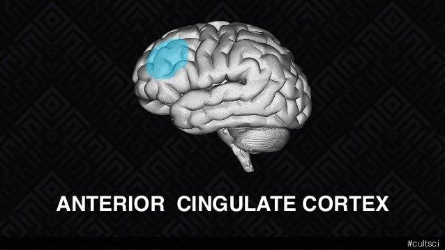 ANTERIOR CINGULATE CORTEX #cultsci
