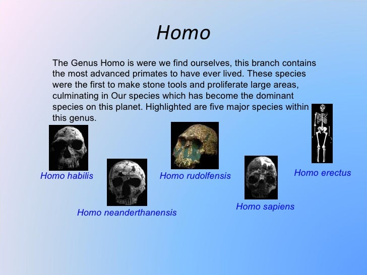 Homo  The Genus Homo is were we find ourselves, this branch contains  the most advanced primates to have ever lived. These...