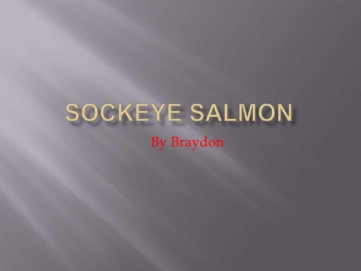 Sockeye Salmon<br />By Braydon<br />