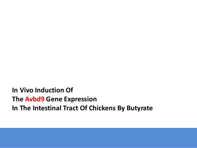In Vivo Induction Of The Avbd9 Gene Expression In The Intestinal Tract Of Chickens By Butyrate