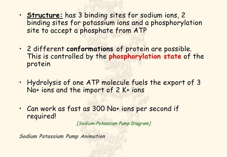 Sodiumpotassium Pump