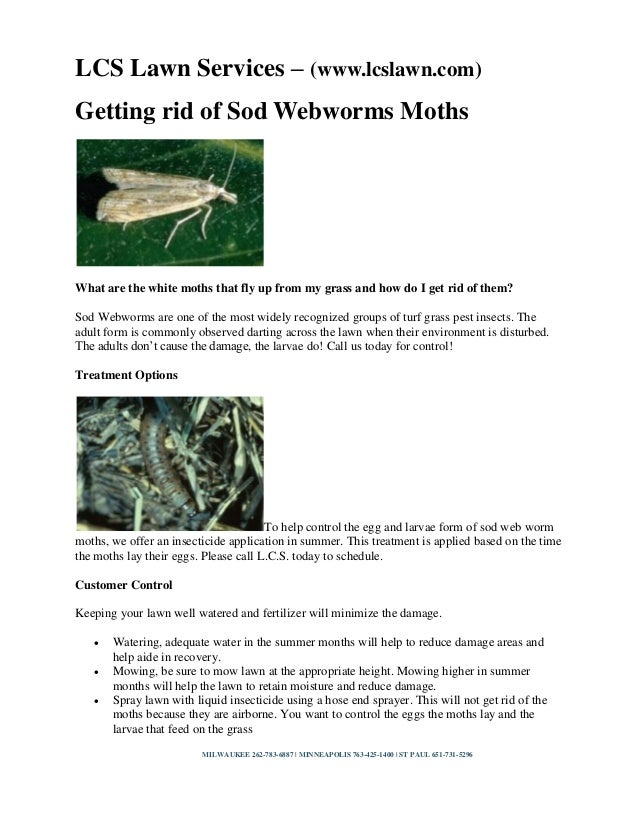LCS Lawn Services – (www.lcslawn.com) Getting rid of Sod Webworms Moths  What are the white moths that fly up from my gras...