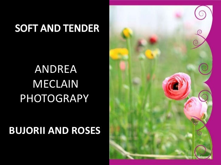 SOFT AND TENDER <br />ANDREA MECLAINPHOTOGRAPY <br />BUJORII AND ROSES <br />