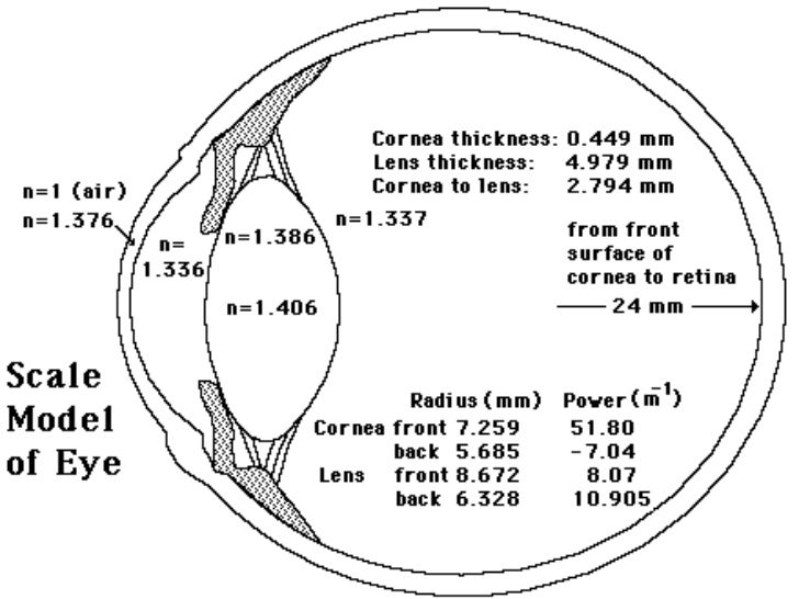 Soft contact lens 345.pd f 3