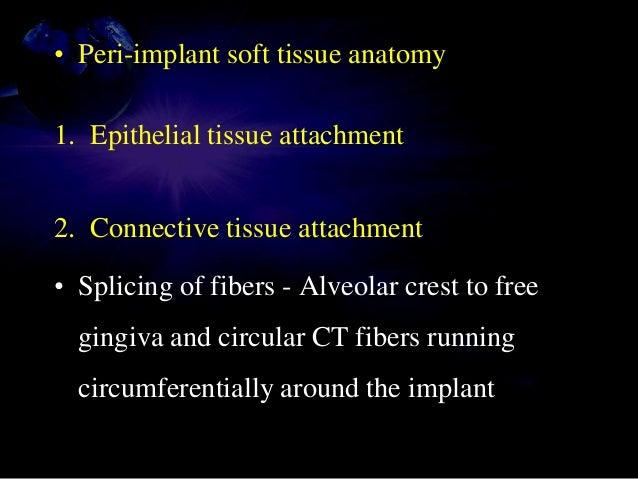 • Peri-implant soft tissue anatomy 1. Epithelial tissue attachment 2. Connective tissue attachment • Splicing of fibers - ...