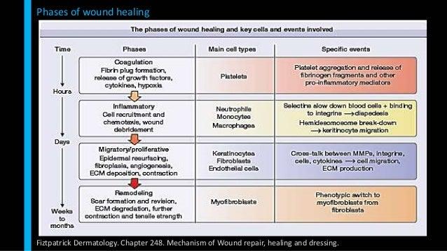 Soft Tissue Healing