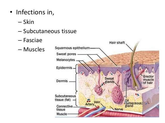 erythematous plaques
