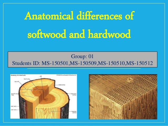 Softwood And Hardwood