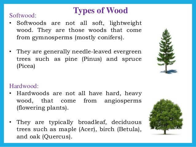 Hardwood And Softwood Trees ~ Softwood and hardwood