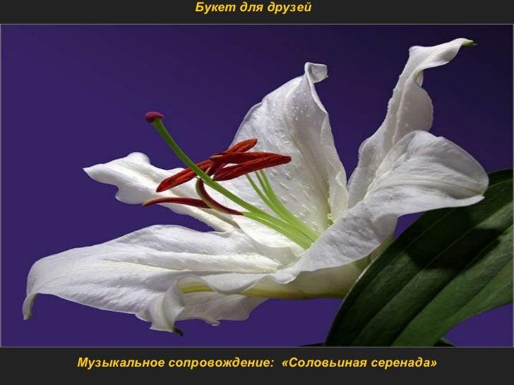 Музыкальное сопровождение :  «Соловьиная серенада» Букет для друзей